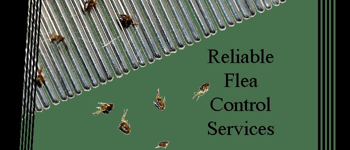 Reliable Flea Control Services