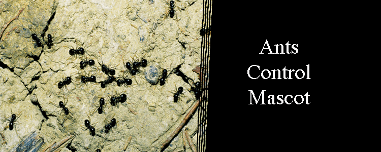 Ants Control Mascot
